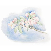 Äppelblom - Carina Holgersson