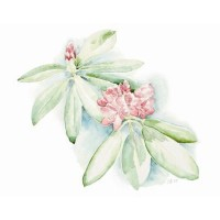 Rhododendron - Carina Holgersson